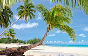 5 bonnes raisons d'aller en République Dominicaine