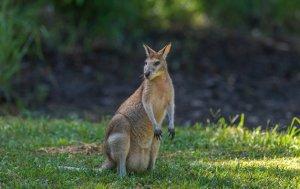 5 bonnes raisons d'aller en Australie